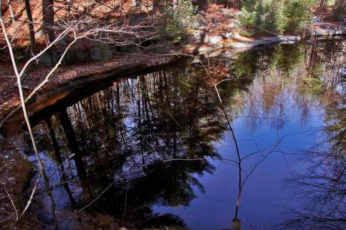Graniteville Woods