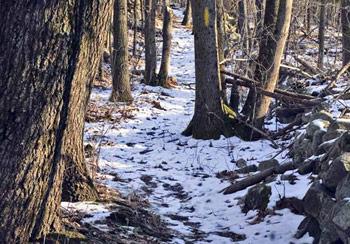 Tom Paul Trail