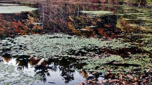 Grassy Pond Reflection
