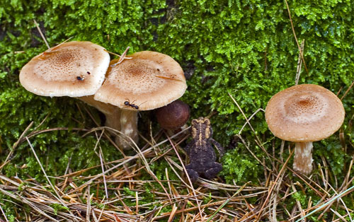 Emerson And The Meaning Of Mushrooms Photos And Thoughts From My