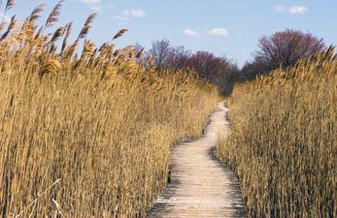 A boardwalk through the marshes on Plum island.